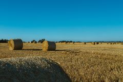 Yellow wheat field with straw bales after harvesting on a sunny day in Normandy, France. Country landscape, agricultural. Fields in summer. Environment friendly Stock Photo