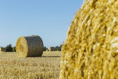 Yellow wheat field with straw bales after harvesting on a sunny day in Normandy, France. Country landscape, agricultural. Fields in summer. Environment friendly Stock Photos