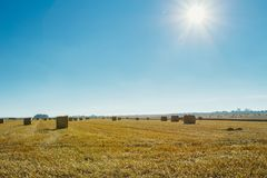 Yellow wheat field with straw bales after harvesting on a sunny day in Normandy, France. Country landscape with sunbeams Stock Image