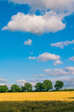 A yellow wheat filed with green trees in background. Green trees on the horizon a white clouds in blue sky above. Germany Royalty Free Stock Images