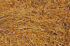 Yellow wheat straw texture agricultural concept royalty free stock images