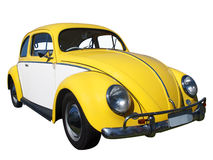 Yellow and White Beetle Stock Photography
