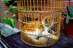 The yellow and white cat in a cage feels sad Royalty Free Stock Photography