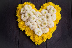 Yellow  and white chrysanthemum flower  shaped like a heart Stock Photos