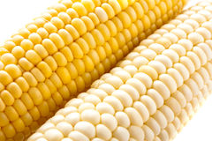 Yellow and white corn Royalty Free Stock Images