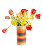 Yellow and white daffodils flowers, red orange tulips in a color Stock Photos