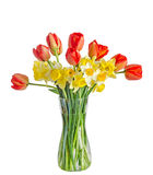 Yellow and white daffodils flowers, red orange tulips in a trans Royalty Free Stock Image