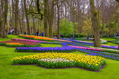 Yellow and white daffodils in Keukenhof park, Lisse, Holland, Netherlands. Royalty Free Stock Photography