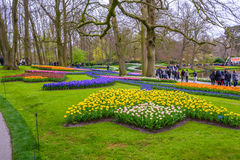 Yellow and white daffodils in Keukenhof park, Lisse, Holland, Netherlands. Royalty Free Stock Photos
