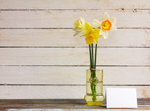 Yellow and white daffodils Stock Images
