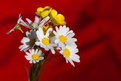 Yellow and white daisies Stock Photo