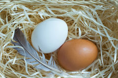 Yellow, white eggs and feather on  straw Royalty Free Stock Images