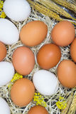 Yellow and white eggs, flower and wheat on straw Stock Image