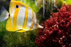 Yellow and White Fish stock images
