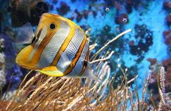 Yellow and white fish. Dish Fish in Artis Zoo in Amsterdam stock photo