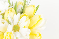 Yellow and white flowers close up Royalty Free Stock Photography
