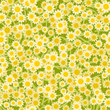 Yellow white flowers seamless background pattern Stock Images