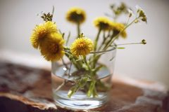 Yellow and white flowers are in a vase with water stock photo