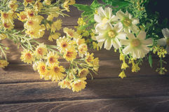 Yellow and white flowers on wood. Stock Images