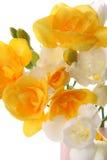 Yellow and white freesia Royalty Free Stock Image