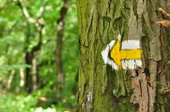 Yellow and white hiking trail signs symbols on tree Royalty Free Stock Photography
