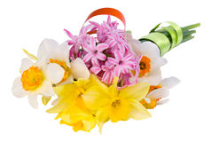 Yellow and white narcissus Royalty Free Stock Image