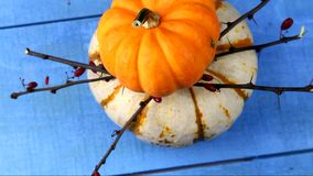 Yellow and white Pumpkins stock footage