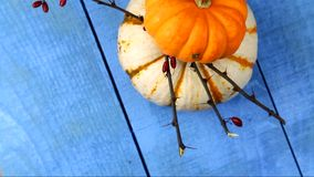 Yellow and white Pumpkins stock video
