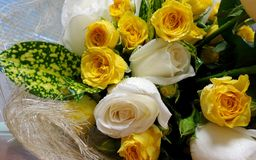 Yellow and white roses Stock Photography