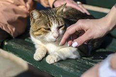 A yellow-white stray cat sits on a bench and an elderly woman and a young girl with a beautiful manicure stroke her royalty free stock photos