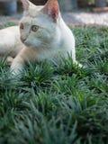 Yellow White Striped Head Notch Standing. Stray Cat Yellow White Striped Head Notch Standing Stock Photo