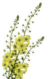 Yellow Wild Flower Stock Photography