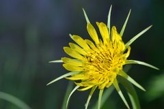 Yellow wild flower Stock Photo