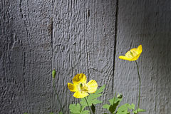 Yellow wild flowers Stock Photo