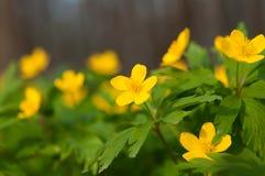 Yellow wild flowers Stock Photos