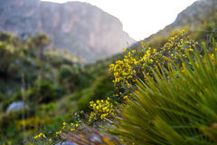 Yellow wild flowers at dawn in Sicily Stock Images