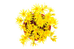Yellow wild flowers Royalty Free Stock Photos