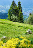 Yellow wild flowers on summer mountain slope Stock Images