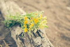 Yellow wildflowers bouquet summer freshness. Yellow wildflowers bouquet summer freshnes Royalty Free Stock Photo