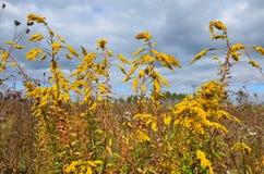 Yellow wildflowers close-up stock photo