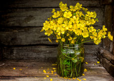 Yellow wildflowers Stock Photo