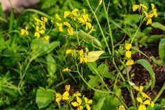 Yellow wildflowers that insects love stock photography