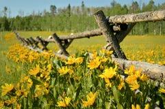Yellow  Wildflowers Stock Image