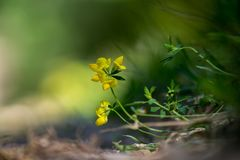 Yellow wildflowers with natural background Stock Photo
