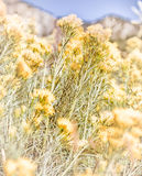 Yellow Wildflowers Stock Photography