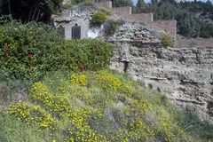 Yellow wildflowers and shrubs against the backdrop of ruins. The ancient stone walls of the Arab fortress of Gibralfaro. Landmark royalty free stock image