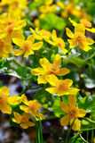 Yellow Wildflowers Royalty Free Stock Images