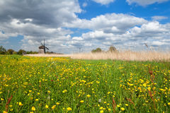 Yellow wildflowers and windmill Stock Photography