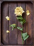 Yellow wilted rose petals Royalty Free Stock Photography