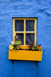 Yellow window flower box on blue wall 002. Colorful crooked yellow flower box on blue wall, kinsale, ireland Royalty Free Stock Photos